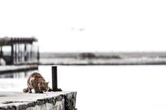 在码头的一只猫 免版税库存图片