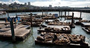 在码头39的海狮 库存图片