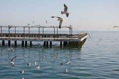 在码头的海鸥 库存图片