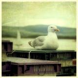 在码头的海鸥 免版税库存照片