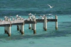 在码头的海鸥 免版税库存图片