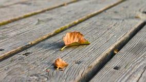 在码头的秋天叶子 免版税库存图片