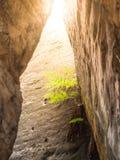 在砂岩墙壁的小绿色蕨 自然的详细资料 库存图片