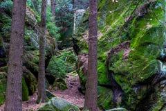 在砂岩岩石的青苔在森林 免版税库存图片