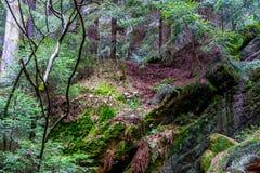 在砂岩岩石的青苔在森林 免版税图库摄影