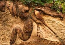 在砂岩的鳄鱼化石 免版税库存照片