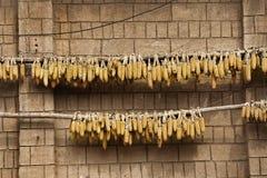 在砖墙上的干玉米吊 免版税库存照片