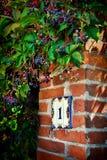 在砖墙上的数字用狂放的葡萄 免版税库存照片