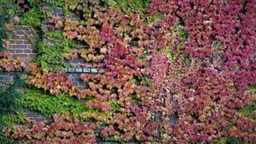 在砖墙上的秋天风景 库存图片