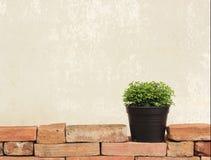 在砖墙上的花盆 库存照片