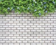 在砖墙上的装饰绿色庭院 免版税库存图片