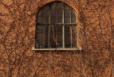 在砖墙上的长得太大的窗口有植物的分支 库存照片