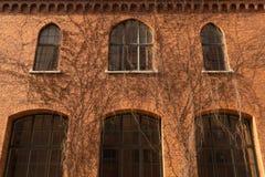 在砖墙上的长得太大的窗口有植物的分支 库存图片