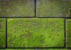在砖墙上的绿色青苔 免版税库存图片