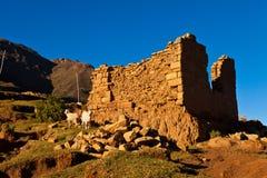 在砖墙前面的山羊 免版税图库摄影