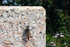 在砖的蜻蜓 免版税库存图片