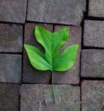 在砖背景的唯一绿色叶子 库存照片