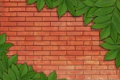 在砖背景,叶子框架的叶子 库存图片