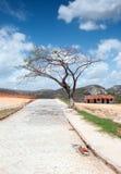 在砖路的边的树 免版税库存照片