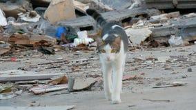 在破旧的街道上的无家可归的美丽的发烟性猫贫寒的 股票录像