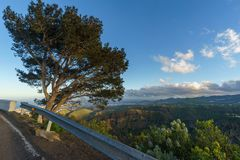 在破火山口de Bandama,大加那利岛,西班牙边缘的树 库存照片
