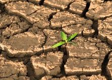 在破裂的泥的新芽 库存照片