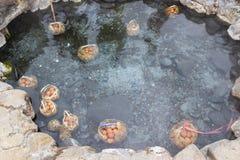 在硫磺水池的热水春天从散发水的九个钻孔的怂恿 免版税库存照片
