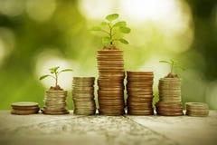 在硬币堆的植物生长,企业概念 免版税库存照片