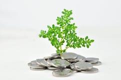 在硬币的植物萌芽 免版税库存照片