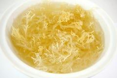 在碗浸泡的白色新鲜的海草 免版税库存照片