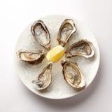 在碗的新鲜的牡蛎有冰的 免版税库存照片