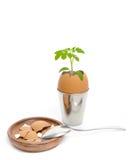 在碗的新鲜的鹌鹑蛋 库存图片