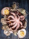 在碗的未加工的章鱼在与海壳和柠檬,蓝色木桌的捕鱼网 免版税库存照片