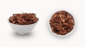 在碗的棉花树 免版税库存图片