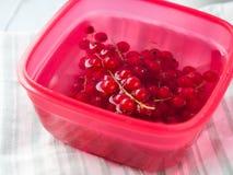 在碗的水中洗涤的红浆果 免版税库存照片