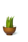 在碗的秋葵 免版税库存图片