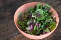 在碗的紫色菠菜叶子 绿色和紫色菠菜的新混合在桌关闭的 免版税库存图片