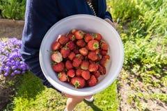 在碗的草莓 库存照片