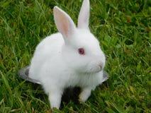 在碗的逗人喜爱的小的兔宝宝 免版税库存图片