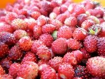 在碗的野草莓 免版税库存图片