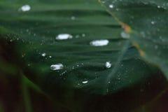 水滴在碳叶子的 免版税库存图片