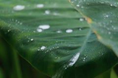 水滴在碳叶子的 免版税库存照片
