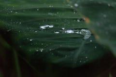 水滴在碳叶子的 库存照片
