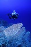 在礁石上的潜水者 库存照片