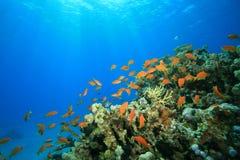 在礁石上的珊瑚发光热带的星期日 免版税库存照片