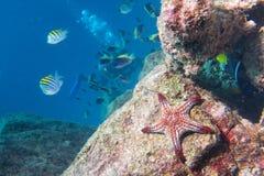 在礁石五颜六色的水下的风景的海星 图库摄影