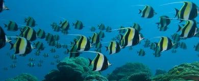 在礁石仓促的珊瑚时数 免版税库存图片