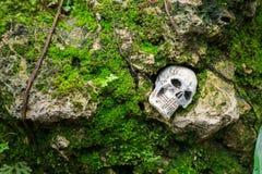 在礁石的人的头骨与青苔 免版税图库摄影