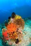 在礁石的明亮地色的毛头星 库存照片