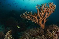 在礁石的海绵在Ras阿尔塔 库存图片